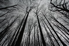 Creepy Forest Royalty Free Stock Images