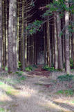 Creepy Forest Stock Photos