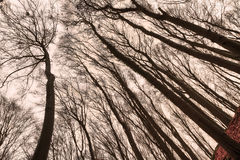 Creepy Forest Stock Photo