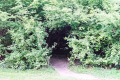 Creepy forest entry at daytime with path way. Green Royalty Free Stock Photography