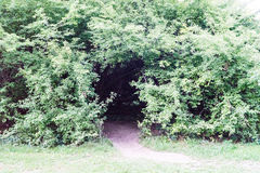 Creepy forest entry at daytime with path way. Green Royalty Free Stock Photos