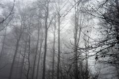 Creepy Forest Fog Background Stock Photography