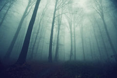Creepy forest path Royalty Free Stock Images