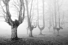 Creepy forest with scary trees. In black and white Stock Photography