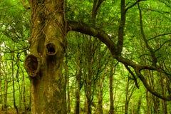 Creepy forest tree Royalty Free Stock Photo