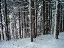 Creepy forest in winter Stock Image