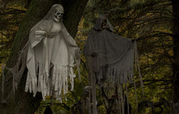 Creepy Halloween Ghosts in the Trees. Two ghosts appear to be floating in the trees with ragged clothing and skeleton hands and faces Stock Photography