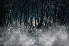 A creepy Gothic moonlit foggy woods at night. Great for horror, Gothic, Creepy, and scary projects. royalty free stock image