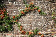 Free Creepy Green Plants With Orange Seeds And Bare Stems And Roots On The Other Side Of Grungy Brick Wall In Summer Sunlight Stock Images - 188502984