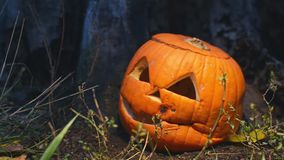 Creepy Halloween pumpkin covered with mold near an old wooden stump is lit by a bright light that moves in different stock video footage