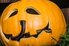 Creepy Halloween Pumpkin Royalty Free Stock Image
