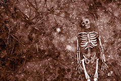 Creepy halloween skeleton Stock Image