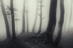 Creepy Halloween woods with mysterious fog Royalty Free Stock Image