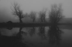 Creepy haunted forest on misty winter day Stock Image