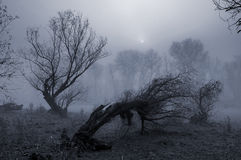 Creepy landscape painting showing dark forest on misty day Stock Images
