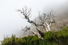 Creepy landscape showing a misty dark forest with dead white trees. On a cold day stock photography