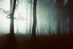 Creepy light in dark misty forest. Gloomy dark autumn day. Filtered image Stock Image
