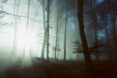 Creepy light in dark misty forest. Gloomy dark autumn day. Filtered image Stock Images