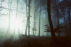 Creepy light in dark misty forest Stock Images