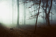 Creepy light in dark misty forest. Gloomy dark autumn day. Filtered image Royalty Free Stock Images