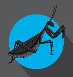 Creepy Mantid Insect Vector Royalty Free Stock Photos
