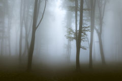 Creepy mist and light into the forest. Gloomy dark autumn day. Filtered image Stock Photos