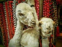 Creepy mummified llamas in market in La Paz, Bolivia Stock Photography