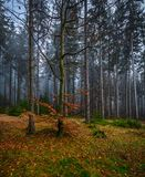 Creepy mystic forest with green grass and colorful fallen trees stock image
