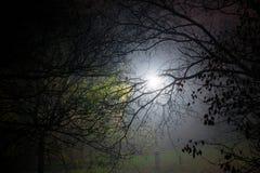 Creepy park at night with illumination Royalty Free Stock Image