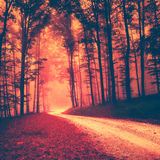Creepy red vintage forest Stock Image
