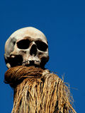 Creepy Skull. Human Skull on Pole against bright blue sky royalty free stock images
