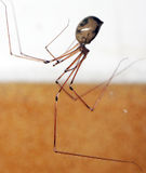 A CREEPY SPIDER Stock Image
