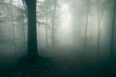Creepy trail in dark foggy forest. Gloomy dark autumn day. Filtered image Stock Images