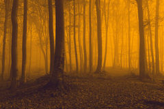 Creepy trail in foggy forest Stock Photo