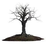 Creepy tree Stock Image