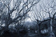 Creepy tree lined path Royalty Free Stock Photography