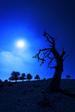 Creepy tree at night Royalty Free Stock Photo
