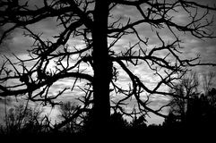 Creepy Tree, Silhouette, Black and White Stock Photos