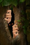 Creepy trunk. Halloween image of creepy hands coming out of a tree trunk Royalty Free Stock Image