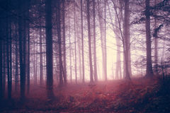 Creepy vintage color forest Royalty Free Stock Image