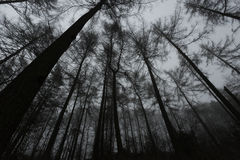 Creepy woods stock images