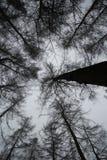 Creepy woods II stock images