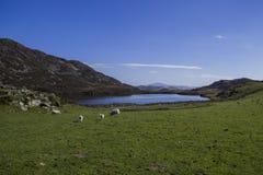 Cregennen sjöar Arkivbild