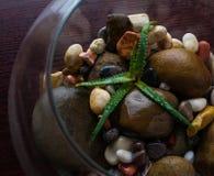 Crema con i fiori freschi, cosmetico, acqua, aloe vera Fotografia Stock Libera da Diritti