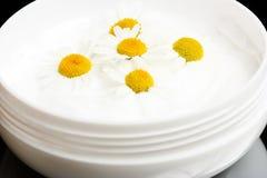 Crema con la manzanilla Imagen de archivo libre de regalías