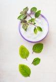 Crema cosmética natural herbaria para el cuidado de piel con las hojas verdes foto de archivo libre de regalías