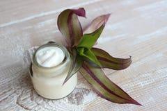 Crema de cara herbaria org?nica imagenes de archivo