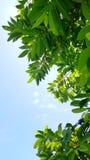 crema della foglia con il cielo Fotografia Stock Libera da Diritti
