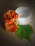 Crema hidratante 2 Fotografía de archivo libre de regalías
