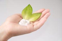 Crema naturale sulla palma Fotografie Stock